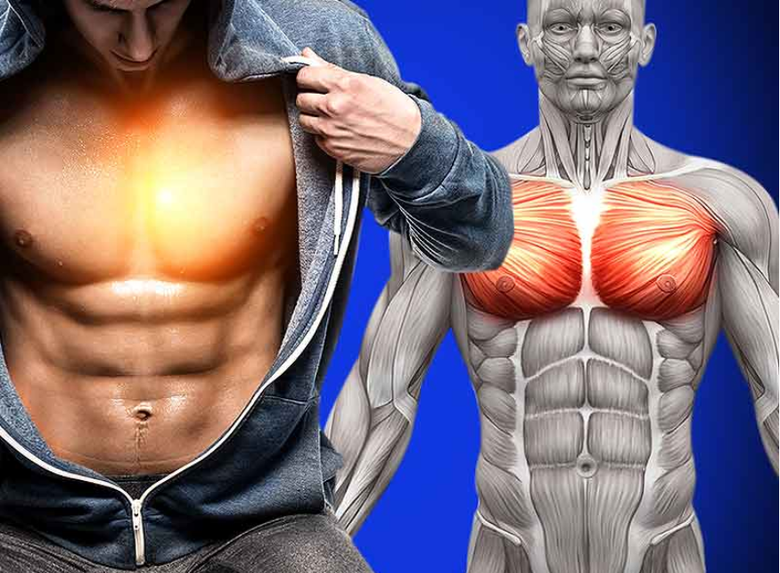 Explosive 6 Non-Bench Exercises For Chest Muscle Growth